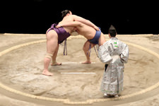 Sumo stable tour